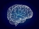 前庭系统与大脑功能的关系
